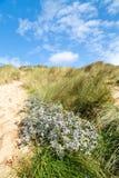 Baía de Holywell em Cornualha Reino Unido imagem de stock
