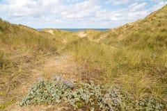 Baía de Holywell em Cornualha Reino Unido fotografia de stock royalty free