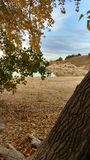 A baía de Nebraska da queda da areia do lago balança árvores Fotos de Stock