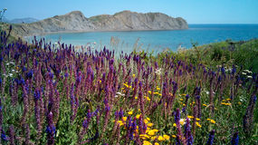 Baía inoperante nas flores, início do verão, Crimeia imagem de stock