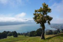 Baía panorâmico Dunedin de Otago da paisagem Fotos de Stock Royalty Free