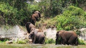 Bañándose los elefantes reúnen en el movimiento fotografía de archivo