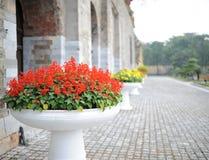 Bañera de la flor roja al lado de la pared grande Imagen de archivo