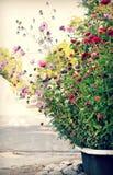 Bañera vieja por completo de flores salvajes y de floraciones coloridas imagenes de archivo