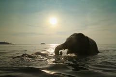Baño de elefantes en el mar Fotos de archivo libres de regalías
