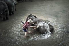 Baño de elefantes en Mae Sa Elephant Camp, Mae Rim, Chiang Mai Fotografía de archivo