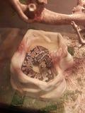 Baño de la serpiente Foto de archivo libre de regalías