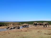 Baño de los elefantes Addo Imágenes de archivo libres de regalías
