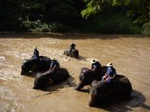 Baño del elefante Foto de archivo libre de regalías