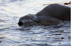 Baño del elefante Imagen de archivo libre de regalías