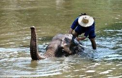 Baño del elefante Fotografía de archivo libre de regalías