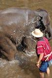 Baño del elefante Imagen de archivo
