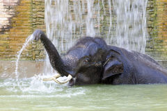 Baño del elefante Fotografía de archivo