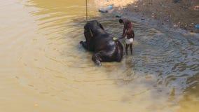 Baño del elefante Fotos de archivo