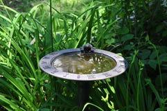 Baño del pájaro Imagen de archivo libre de regalías