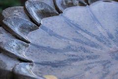 Baño del pájaro en un viñedo de St. Helena Imagen de archivo libre de regalías