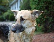 Baño del perro fotografía de archivo