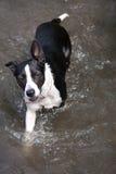 Baño del perro Foto de archivo