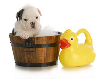 Baño del perro fotografía de archivo libre de regalías