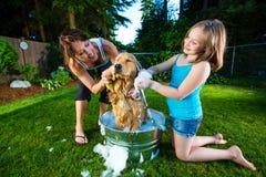 Baño del perro Imagen de archivo libre de regalías