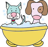 Baño del perro y del gato Fotografía de archivo libre de regalías
