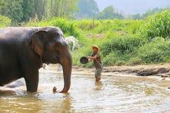 Baño diario de los elefantes en el centro del elefante Fotos de archivo