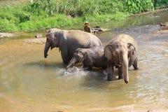 Baño diario de los elefantes en el centro del elefante Fotografía de archivo libre de regalías