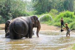 Baño diario de los elefantes en el centro del elefante Imagen de archivo