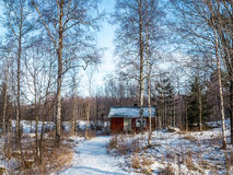 Baño en una madera del invierno fotografía de archivo libre de regalías