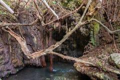 Baños de Aphrodite Grotto con la primavera de la charca y de agua en Akamas imagen de archivo