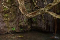 Baños de Aphrodite Grotto con la primavera de la charca y de agua en Akamas fotografía de archivo libre de regalías