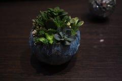 Bańczasty garnek z sukulent roślinami i lustrzaną piłką zdjęcia stock