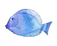 bańka kopii ryby morskie życie ilustracyjnego wodorosty są rozmieszczone tekstu wektora akwareli morska ryba Obrazy Royalty Free