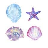 bańka kopii ryby morskie życie ilustracyjnego wodorosty są rozmieszczone tekstu wektora Akwareli seashells Obraz Royalty Free