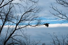 Bażanta latanie w niebie zdjęcie royalty free