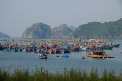 ba海湾猫halong海岛 图库摄影
