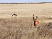 Bażanta polowanie Fotografia Stock