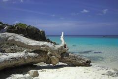 Ba?a azul do mar Água do mar transparente dos azuis celestes Praia branca da areia e árvore caída velha imagens de stock royalty free