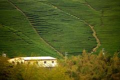 Ba Gua Tea garden in Taiwan Royalty Free Stock Images