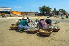 Women classifying fish Stock Photos
