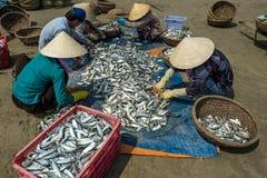 Women classifying fish Royalty Free Stock Photo