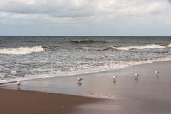 Bałtyckie <a href='http://www Obrazy Royalty Free
