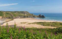 A baía de Gower South Wales Three Cliffs com flores cor-de-rosa próximo a Oxwich Imagens de Stock