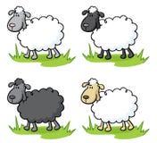 Baa Lambs. Fluffy little black and white sheep Stock Photo