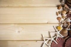 Baackground di legno luminoso con una collezione di conchiglie alle coperture del lato, di giallo, di rosa, di bianco e del broun Immagini Stock Libere da Diritti