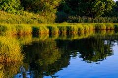 Baaigebied met grassen en waterbezinning van dok in zomer Stock Foto's