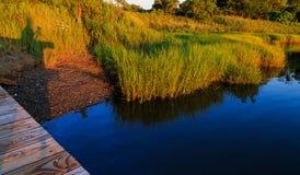 Baaigebied met grassen en waterbezinning van dok in zomer Stock Fotografie