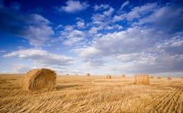 Baal in landschap Stock Foto's