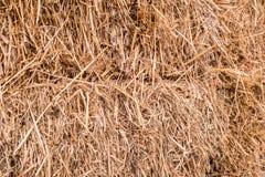 Baal van stro stock afbeeldingen
