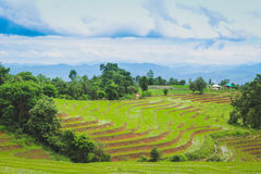 Baan Pa Pong Piang located in Mae Jam, Chiangmai, Thailand this place is farmer plant rice on terrace. Royalty Free Stock Image